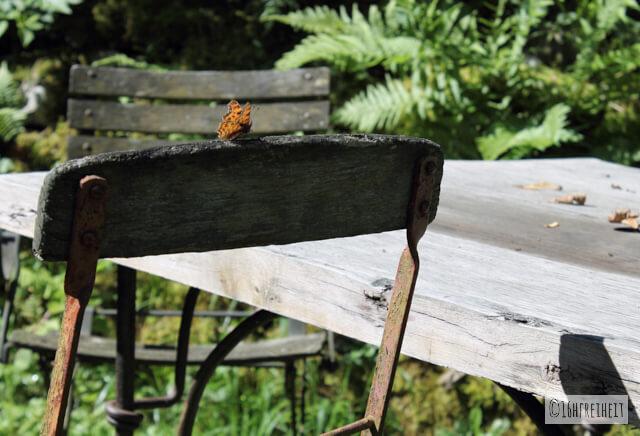 Haag_Schmetterling