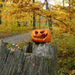 Herbst_Kürbis
