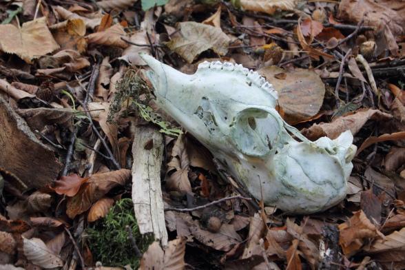 Herbstwanderung im Trubachtal Tierschädel