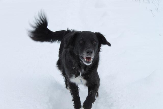 Jahresrückblick 2016: Hund im Schnee