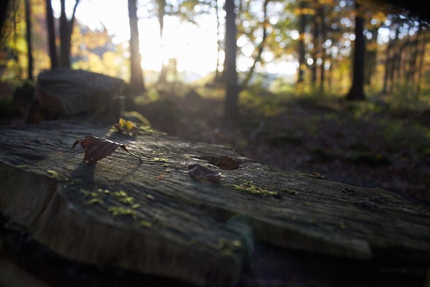 Sonnenaufgang am Glatzenstein Baumstumpf