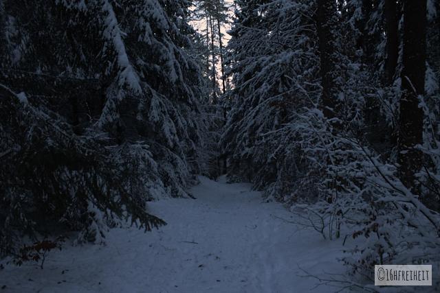 Pottenstein Ewige Anbetung 2017_Verschneiter Wald
