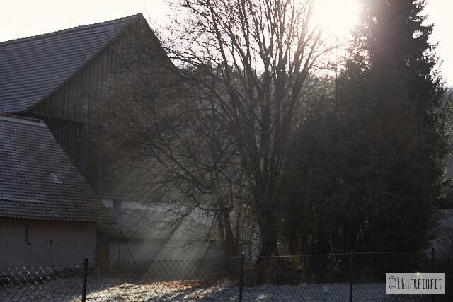 Zuckerhut bei Birkenreuth: Licht bricht durch die Äste eines Baumes