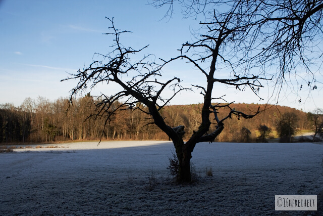 Zuckerhut bei Birkenreuth_Baum