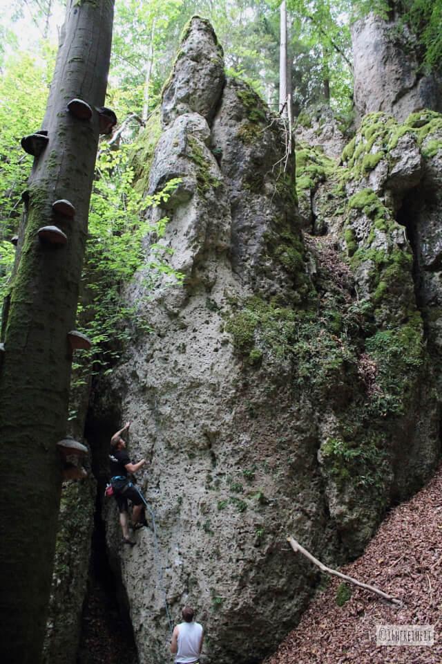 5 Tipps für Anfänger: So machst du schönere Fotos beim Klettern_Baum