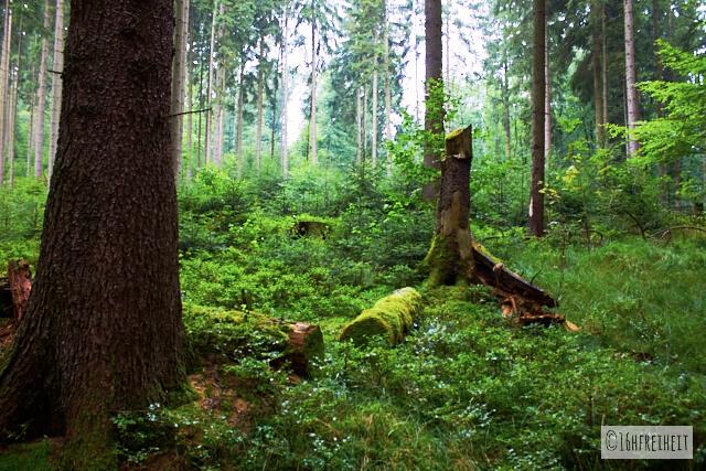 Sächsische Schweiz_fuer_Eilige_Im Nationalpark bei Regen